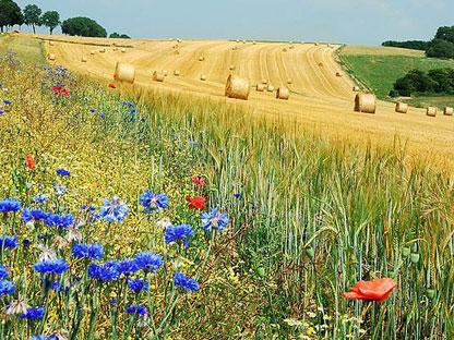 2de Tender Biodiversiteit en bedrijfsleven gaat op 1 juli 2013 van start