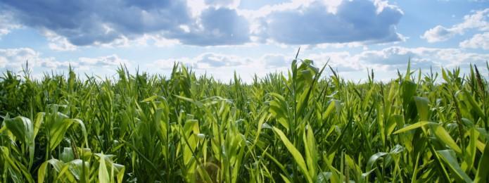 Innovatievouchers Agri & Food/Tuinbouw & Uitgangsmaterialen vanaf 6 mei 2014